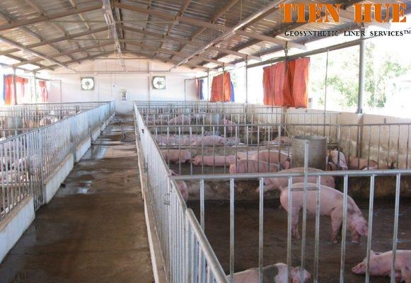 màng chống thấm hdpe trong thi công hầm biogas
